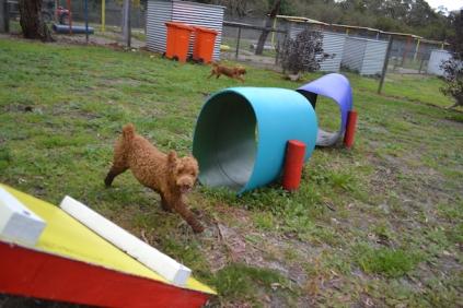 banksia-park-puppies-koko-13-of-29
