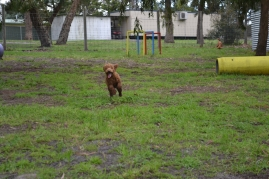 banksia-park-puppies-koko-22-of-29