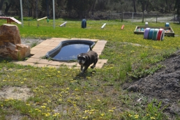 banksia-park-puppies-lila-2-of-19