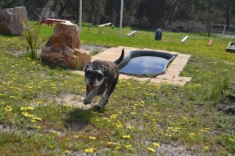 banksia-park-puppies-lila-3-of-19