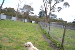 banksia-park-puppies-ocean-5-of-21
