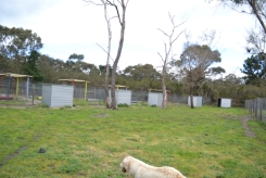 banksia-park-puppies-ocean-6-of-21