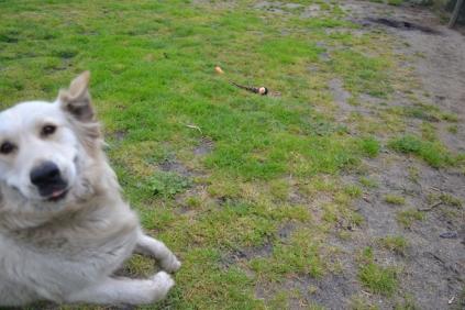 banksia-park-puppies-oko-1-of-29