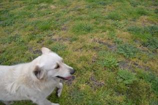 banksia-park-puppies-oko-11-of-29