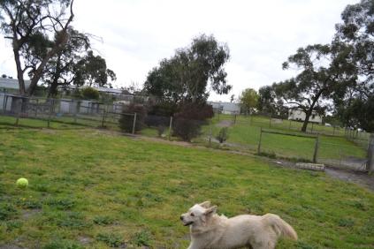 banksia-park-puppies-oko-12-of-29