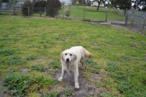 banksia-park-puppies-oko-14-of-29