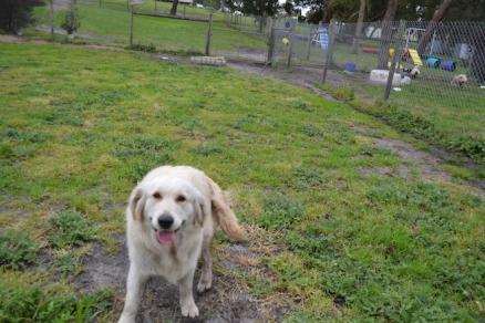 banksia-park-puppies-oko-15-of-29
