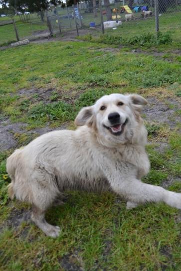 banksia-park-puppies-oko-17-of-29
