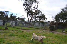 banksia-park-puppies-oko-19-of-29