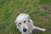 banksia-park-puppies-oko-2-of-29