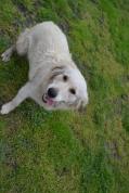 banksia-park-puppies-oko-23-of-29