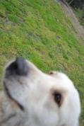 banksia-park-puppies-oko-24-of-29