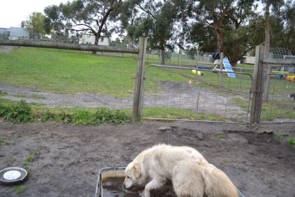 banksia-park-puppies-oko-25-of-29