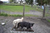 banksia-park-puppies-oko-26-of-29