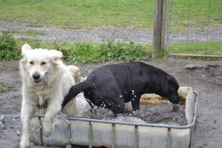 banksia-park-puppies-oko-29-of-29
