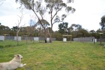 banksia-park-puppies-oko-4-of-29