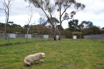 banksia-park-puppies-oko-5-of-29