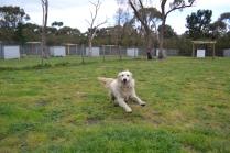 banksia-park-puppies-oko-7-of-29