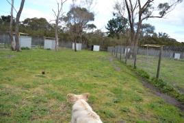 banksia-park-puppies-onnie-12-of-27