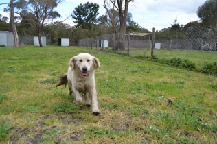 banksia-park-puppies-onnie-26-of-27