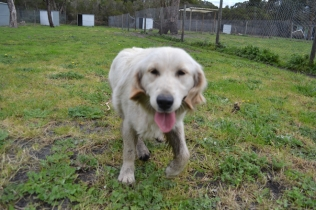 banksia-park-puppies-onnie-27-of-27