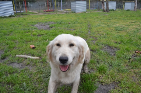 banksia-park-puppies-onnie-7-of-27