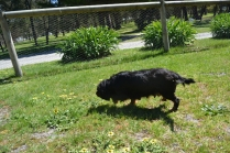 banksia-park-puppies-panky-11-of-25