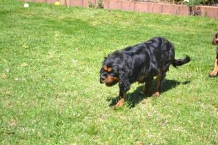 banksia-park-puppies-panky-12-of-25