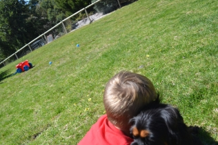 banksia-park-puppies-panky-15-of-25