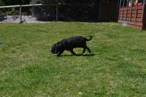 banksia-park-puppies-panky-18-of-25