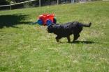 banksia-park-puppies-panky-20-of-25