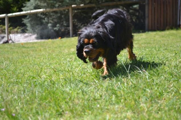 banksia-park-puppies-panky-21-of-25
