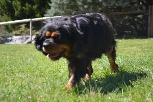 banksia-park-puppies-panky-22-of-25