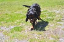 banksia-park-puppies-panky-6-of-25