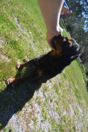 banksia-park-puppies-panky-8-of-25