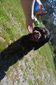 banksia-park-puppies-panky-9-of-25