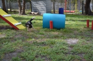 banksia-park-puppies-patricia-1-of-39