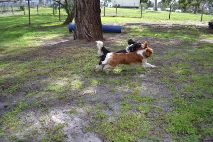 banksia-park-puppies-patricia-11-of-39