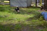 banksia-park-puppies-patricia-13-of-39