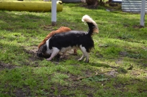 banksia-park-puppies-patricia-15-of-39