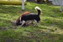 banksia-park-puppies-patricia-15-of-39