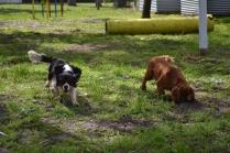 banksia-park-puppies-patricia-16-of-39