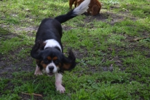 banksia-park-puppies-patricia-18-of-39