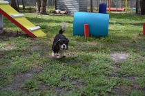 banksia-park-puppies-patricia-2-of-39