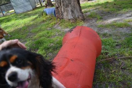 banksia-park-puppies-patricia-20-of-39