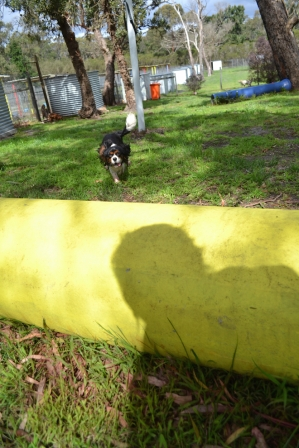 banksia-park-puppies-patricia-21-of-39