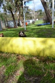 banksia-park-puppies-patricia-22-of-39