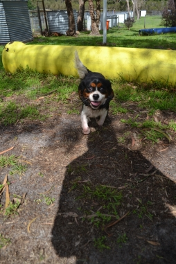 banksia-park-puppies-patricia-24-of-39