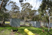 banksia-park-puppies-patricia-25-of-39