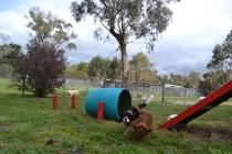 banksia-park-puppies-patricia-29-of-39
